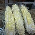 這就是米還沒長好的玉米... 不過長好的部分可是粒粒飽滿喔!