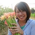 採收了不少玉米筍