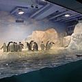 企鵝館!!
