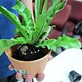 STEP2. 將植物放入