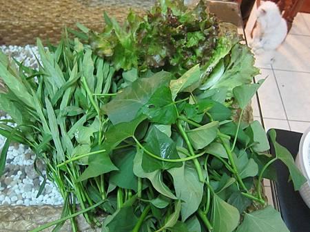 空心菜和蕃薯葉可說是夏季葉菜二寶~ 右上是紅葉萵苣。