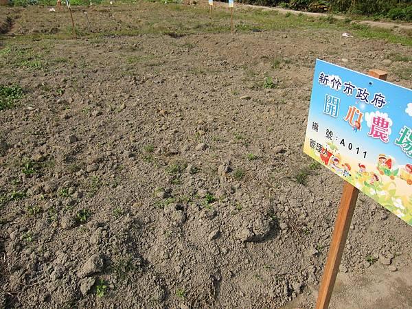 20101222_我們抽到了新竹市政府開心農場A11~