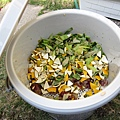 廚餘(我們只取沒煮過的葉菜、果皮...等