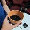 STEP1. 將新的盆栽放約2cm的土