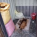 環保廁所:P 用木屑直接當堆肥,突然覺得大家都變成喵咪了~