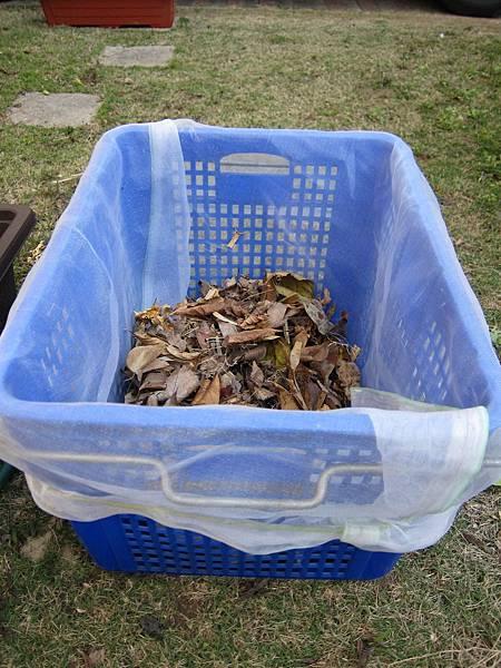 準備一個大箱子(記得底部可排水、側邊可通風為宜)