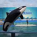 Miami SeaAquarium.JPG