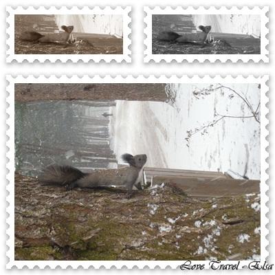 2011/1221 - 南怡島