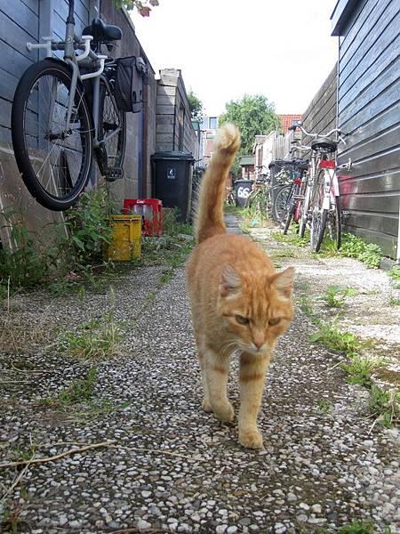 鄰居的貓常常跑來黏在我的小腿邊