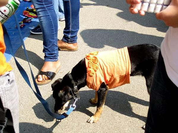 連狗狗也要跟上橘色風潮