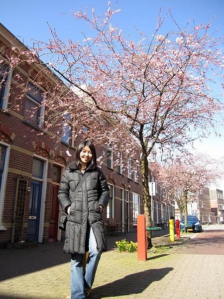 我家隔壁街的美麗櫻花