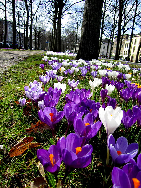 春天的 Maliebaan