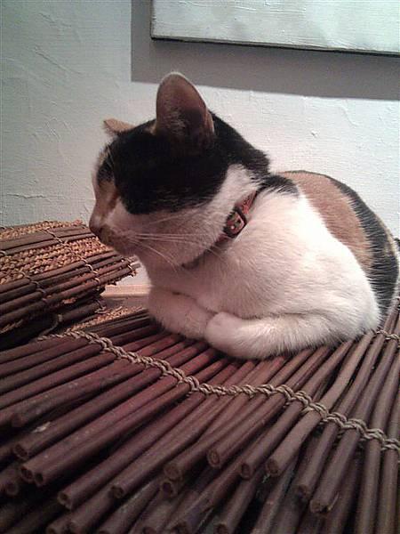 貓手的姿勢好可愛