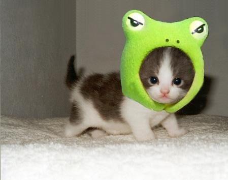 可愛的青蛙小貓.jpg