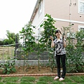 7/27 家庭菜園,還沒有很茂盛的時候