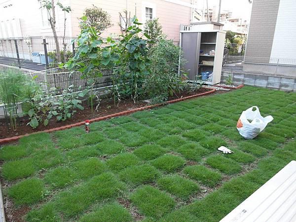 下午沒事去院子除雜草&收成&殺螞蟻