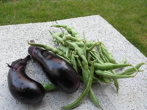 下午又在院子裡採了一堆四季豆