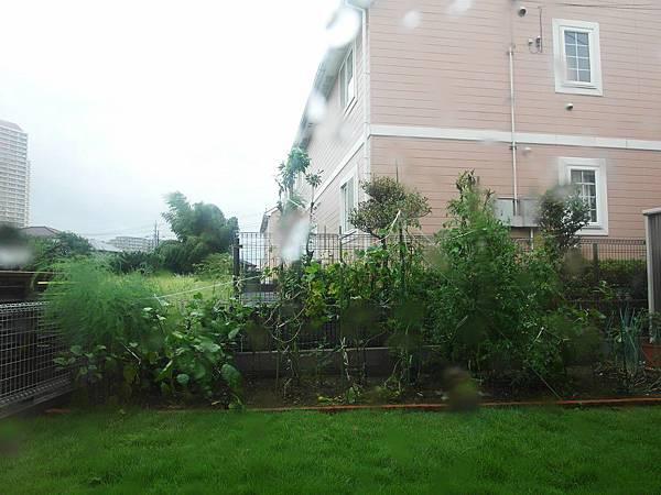 颱風天 樹都吹歪了