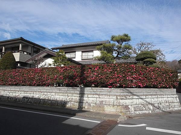 1/3 公婆家巷口的房子,會開花的樹牆超讚的