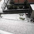 院子也幾乎都被薄薄的一層雪給覆蓋住