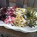 新種的盆栽上潵滿挫冰
