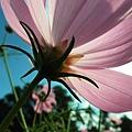 花的背影其實真的很值得拍,視角完全不同!