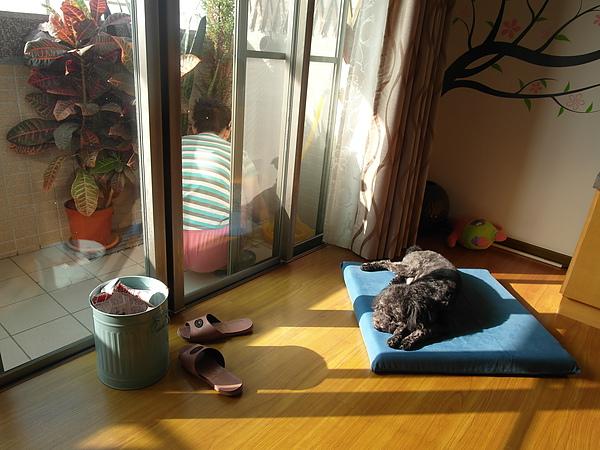 12/5 清理陽台的媽媽&曬太陽的懶蛙