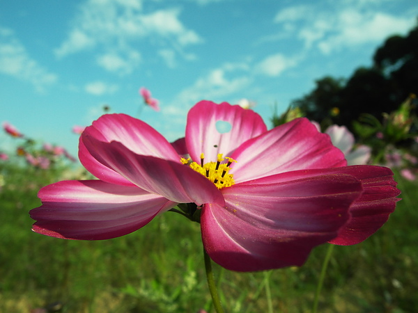 有注意到嗎?其實花瓣被蟲蟲吃掉一個洞唷~