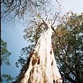 身穿長禮服 婀娜多姿的樹之名模