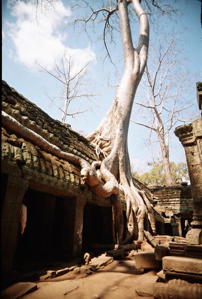 樹都不曉得幾百年了,超級高大的!