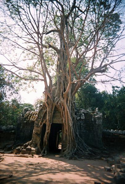 Ta Som東面的門已經被樹給盤据了好壯觀