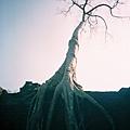樹太搶戲了,搞得我一直拍樹 我可不是拍樹魔人啊...