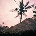 靠海的茅草屋頂 椰子樹 鮮豔的小花 南國氣氛就出來了!