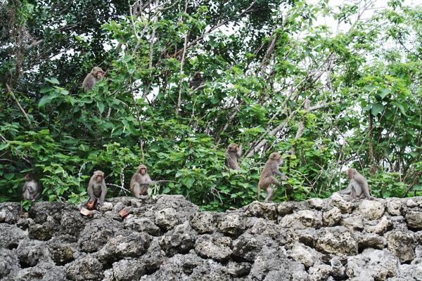 西子灣又不是柴山 卻跑來了一群猴子嚇死人
