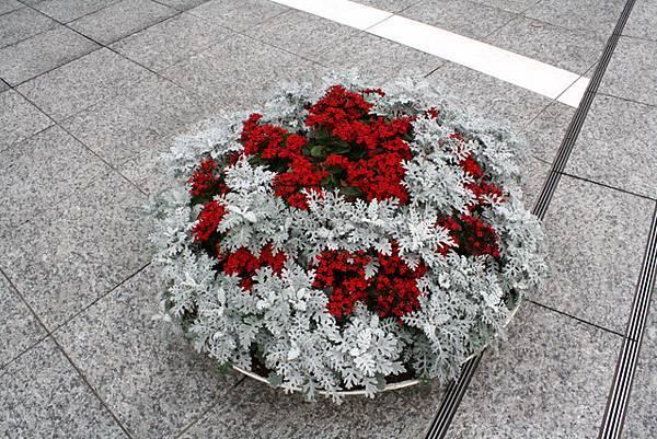 PCP丸の内前面綠化用盆栽的用色很衝突我覺得很讚