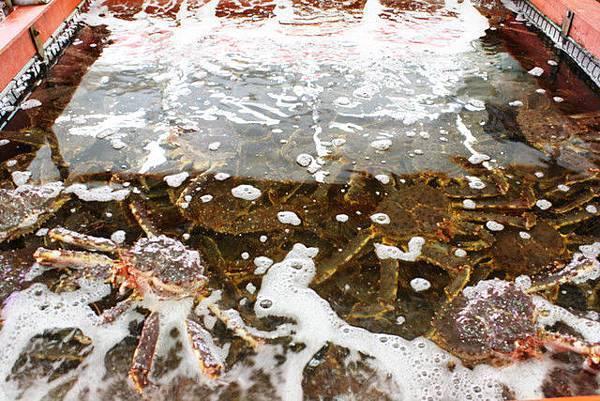 茶夢的斜對面有間螃蟹專賣店,水槽裡的鱈場蟹根本多到在玩壘壘樂