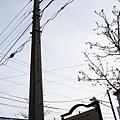這根是日本最古老的水泥電線杆!