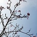 唯獨那支電線杆旁才有的小紅果樹