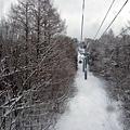 坐上纜車囉~靜靜地往上面移動,左右二旁的樹美得不像話
