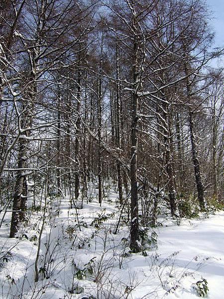 忙著練習滑雪無暇拍風景,趁坐纜車移動時胡亂拍