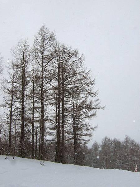 下午三點半,雪還是下個不停