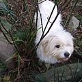 隔壁的小白狗,葉大師說他從來不知道他叫什麼,也沒注意過這隻狗