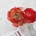 桌上的紅花很有味道,有人知道她的名字嗎?請告訴我!