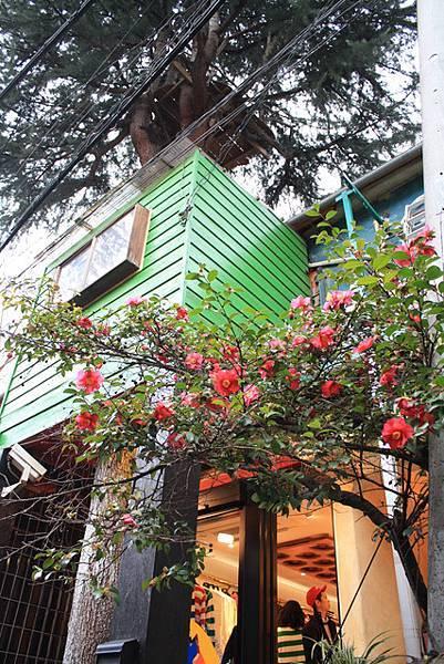 不久後便離開DFG/看到一棵開滿如同夏天般熱情花朵的花樹