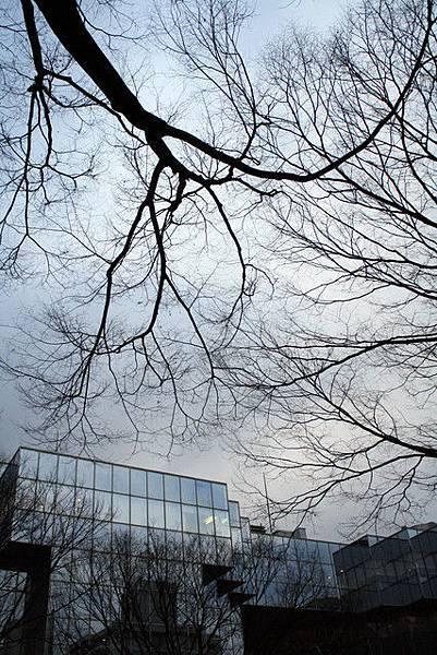 枯樹枝擋住了整片天空,天氣陰陰的
