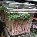 小豆苗裝在這種盒子裡很可愛,好像小朋友的自然實驗