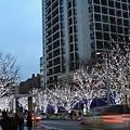 原本的枯枝上頭現在全都佈滿白光好像下過雪一樣