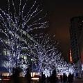 據說每棵櫸木上頭佈滿了數千顆白色藍色的led燈