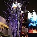 下坡的對街CORNES前面這棵是唯一用紫色led燈點綴的櫸木