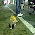 小花貓 與 問路的尖頭鞋男孩